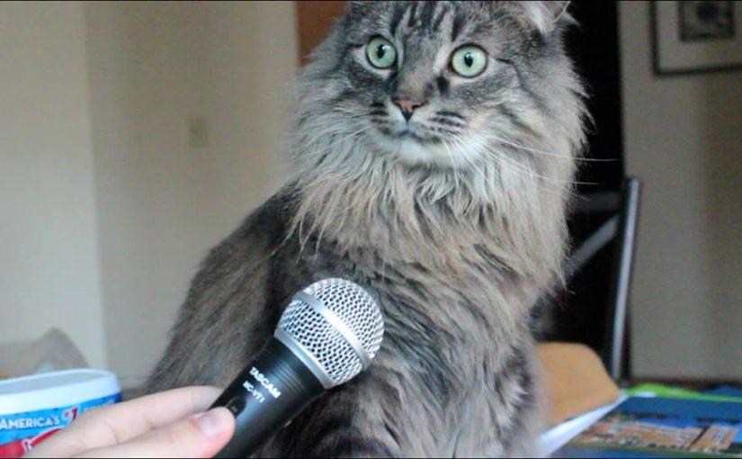 Кот Ерохина причинно-следственный