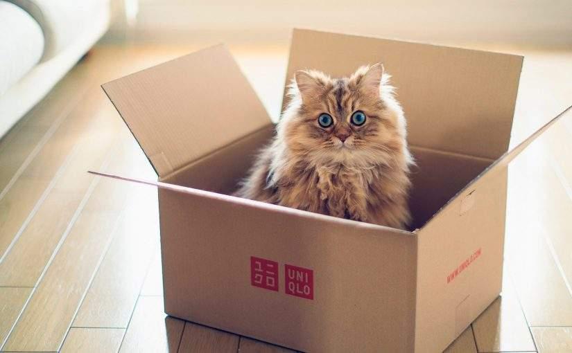Кот Ерохина блокадный