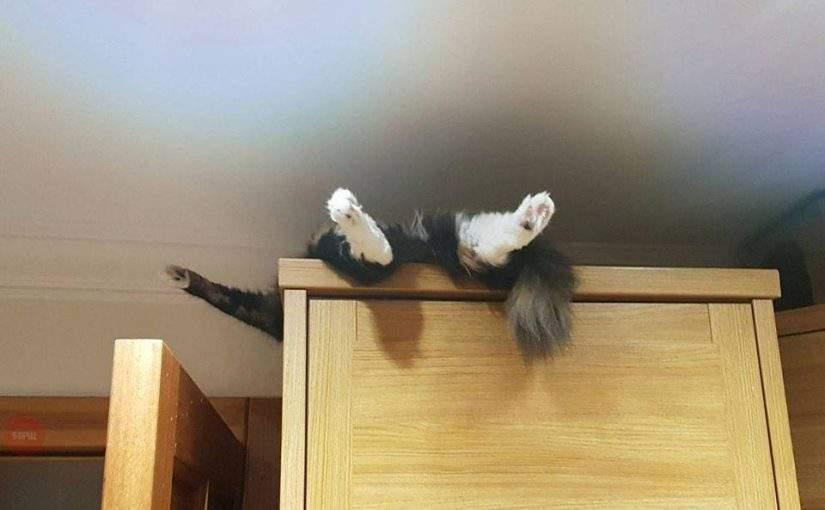 Реплики со шкафа