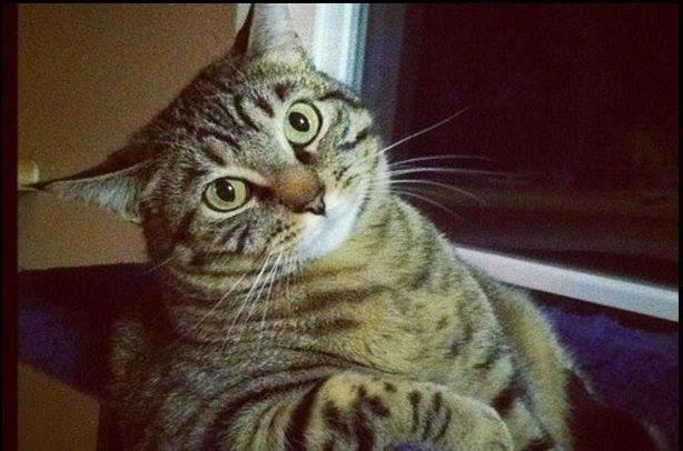 Кот Ерохина злопамятный