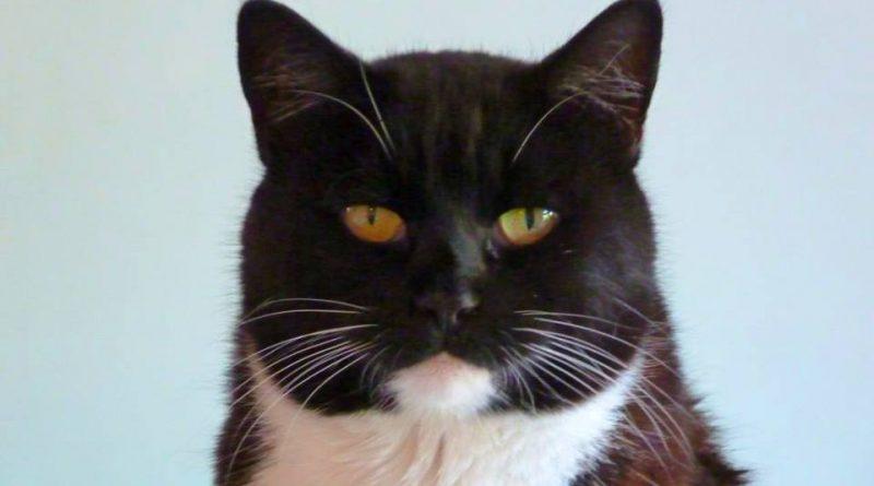 Кот Ерохина заостряющий внимание на ускользающих мелочах