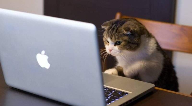 Кот Ерохина жовтневый