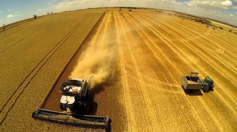 Вже п'ять областей завершили збирання ранніх зернових культур