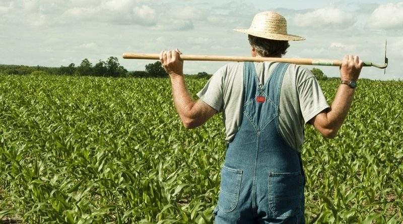 У липні зарплата аграріїв збільшилася на 13%