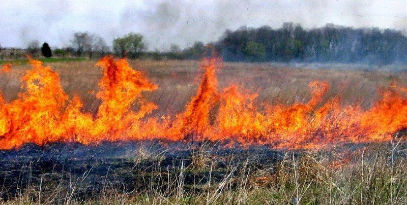 Впродовж минулого тижня підрозділи ДСНС України врятували 40 осіб та ліквідували 3 тис. 45 пожеж