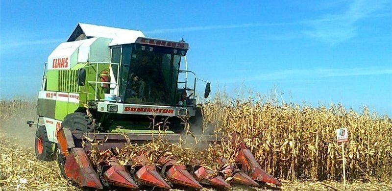 Зібрано перші 200 тонн кукурудзи нового врожаю