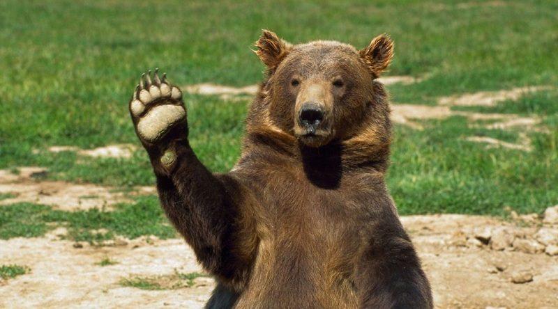"""Чотирьох бурих ведмедів з Херсонщини переселять до НПП """"Галицький"""""""