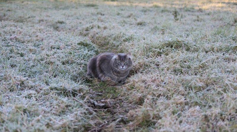 Увага! Попередження про заморозки в окремих областях України!