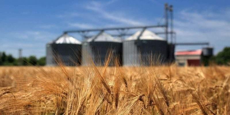 Україна експортувала вже 11,7 млн тонн зернових
