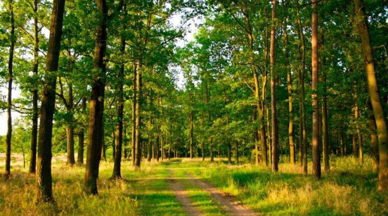 ГПУ повернула державі 0,15 га земель лісового фонду національного природного парку «Голосіївський»