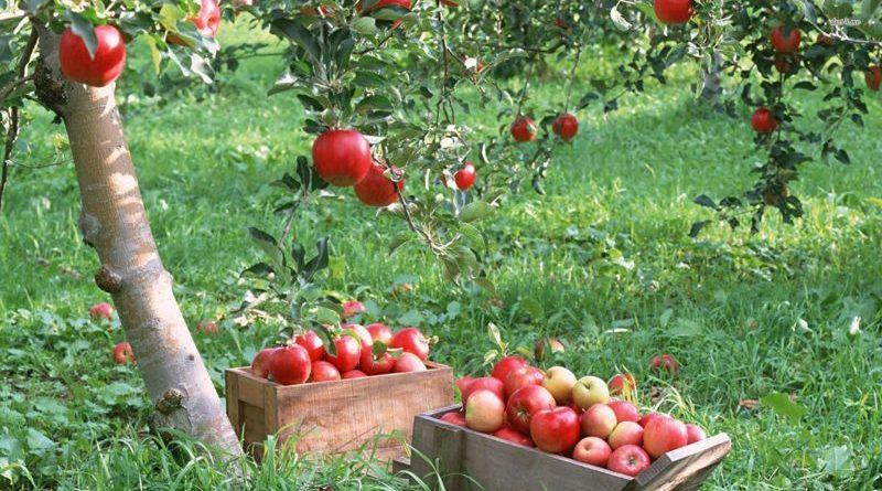 Уряд виділив додаткових 224 млн гривень на держпідтримку садівництва