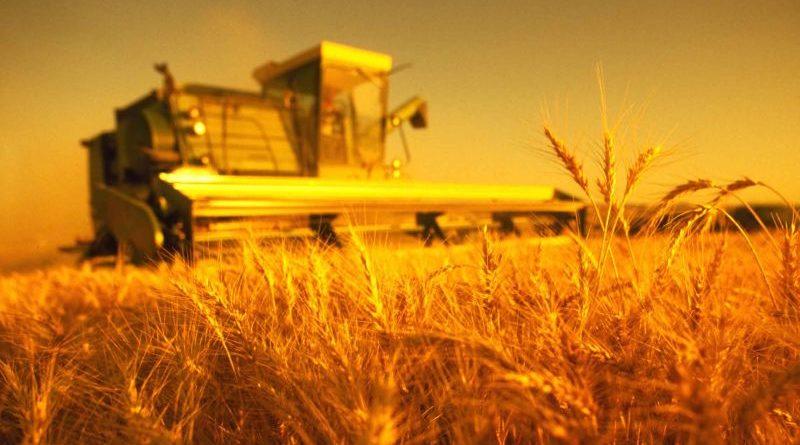 Україна збере другий за обсягом врожай в новітній історії