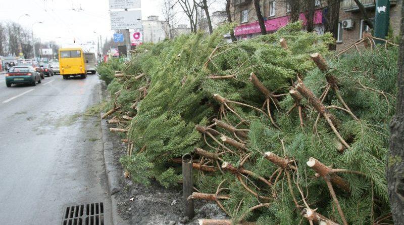 В Україні розпочинається ялинкова кампанія (фото)
