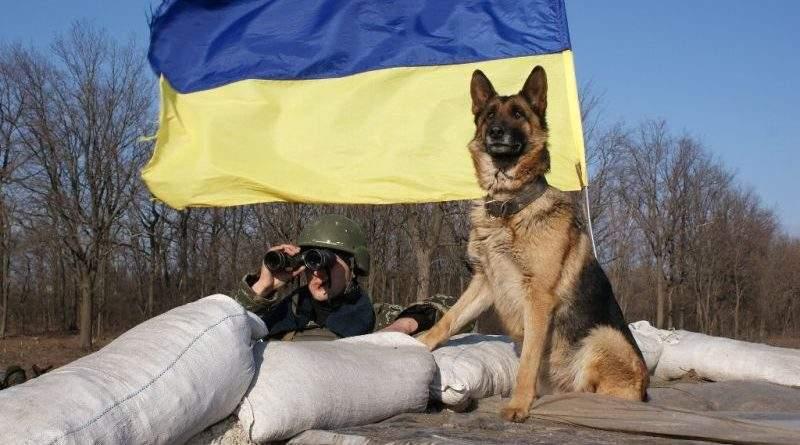Службовий собака в парі з кінологом – потужна сила в боротьбі зі злочинністю (фото)