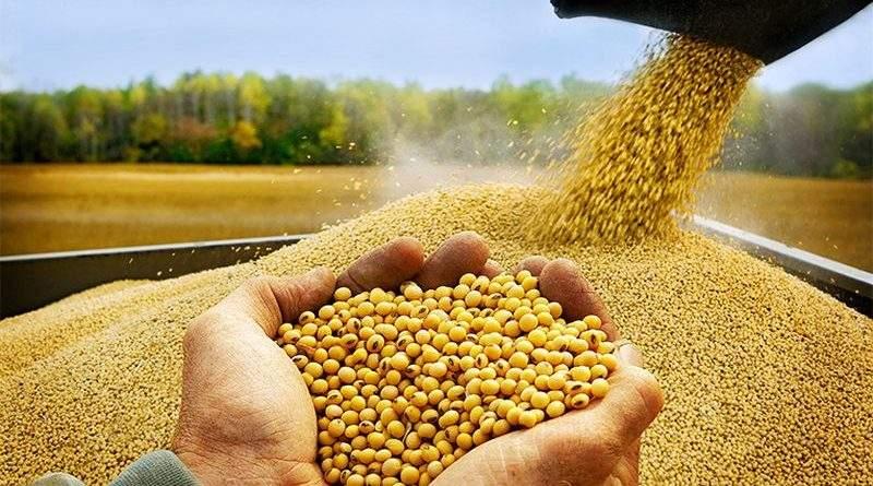 Експорт олійних у поточному році на 1,2 млн тонн перевищив минулорічні показники