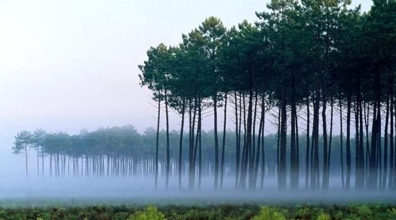 Для рятування українських лісів від всихання запущено флешмоб «Ялинка challenge» (відео)