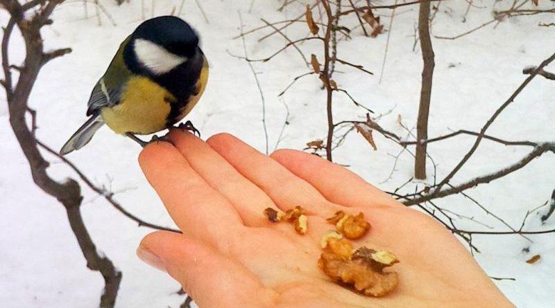 У «Подільських Товтрах» провели природоохоронну акцію «Допоможемо зимуючим тваринам» (фото)