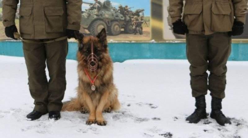 Урочисте вручення відзнак для службових собак (фото)