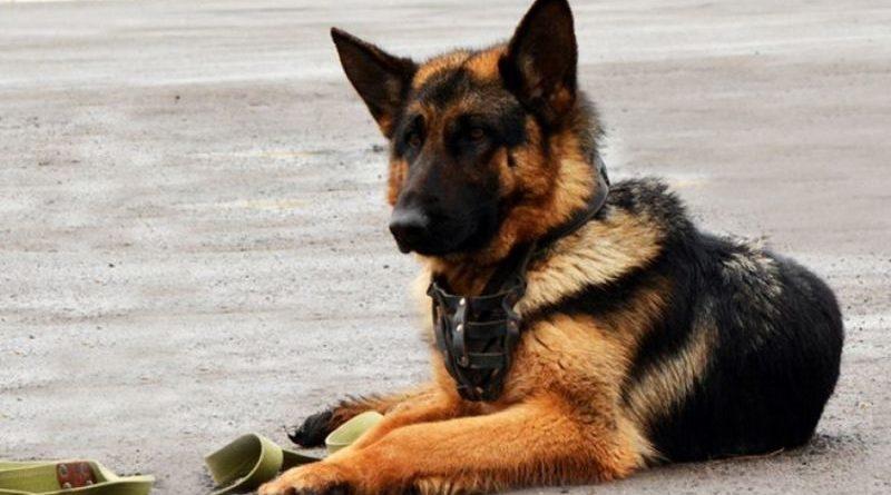 У військовій частині 4114 провели виводку службових собак (фото)