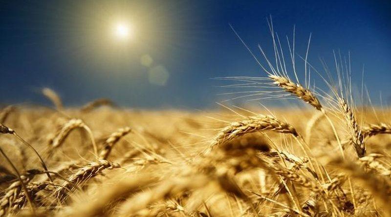 Експорт зернових перевищив 34 млн тонн