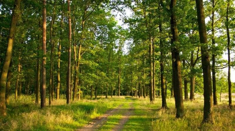 Державі повернуто понад 21 га лісу, які всупереч законодавству передані Обухівською РДА у приватну власність