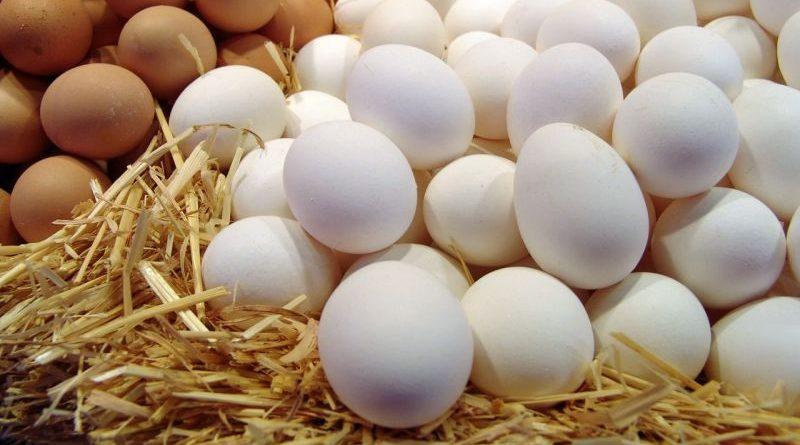 За півроку Україна збільшила експорт яєць на 43%