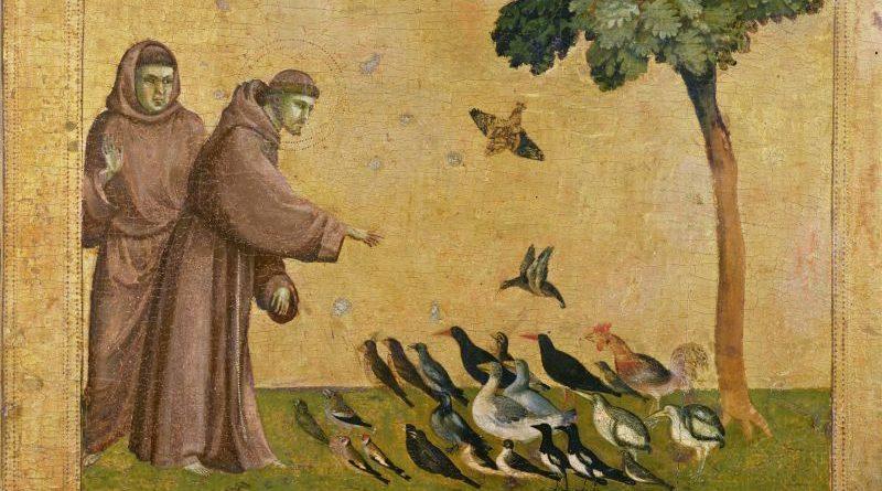 Птички в клювиках приносят интересное