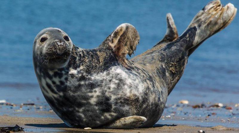Миллионы тюленей не могут ошибаться?