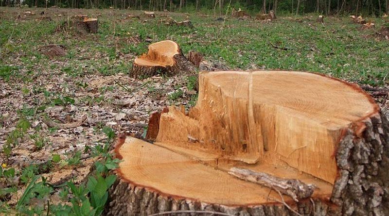 На Вінниччині семи працівникам лісогоспу повідомлено про підозру у незаконній реалізації деревини