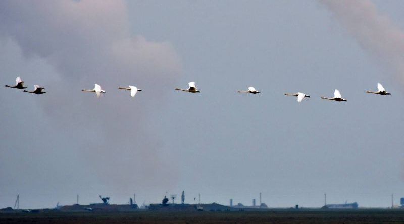 Тривають військові навчання з бойовими стрільбами на полігоні ЗСУ «Ягорлик» (фото, відео)