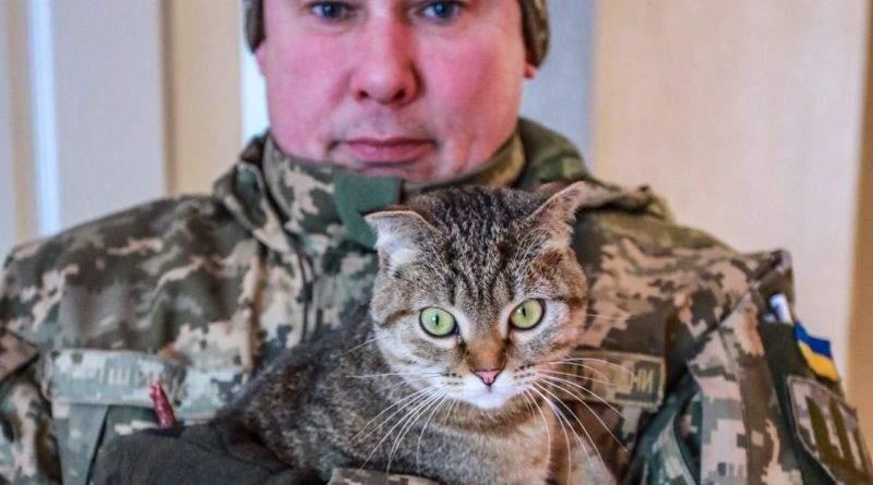 Нам теперь постоянно нужны коты (фото)