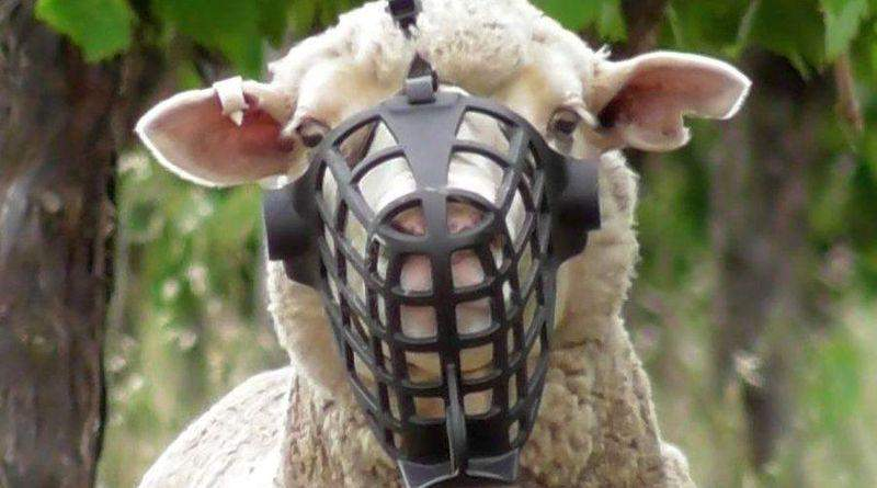 Мовчання овець