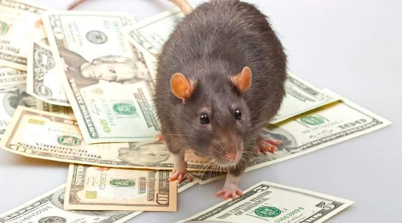 Ми маємо прибрати цих щурів