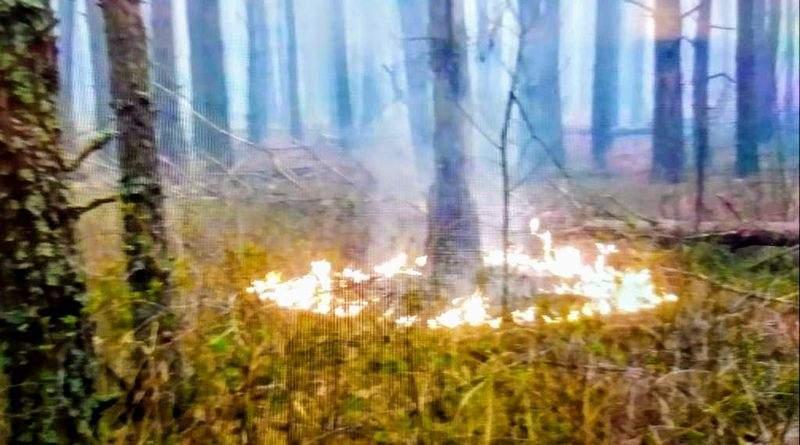 Нацгвардія почала антидиверсійну операцію у зв'язку з лісовими пожежами в Чорнобилі