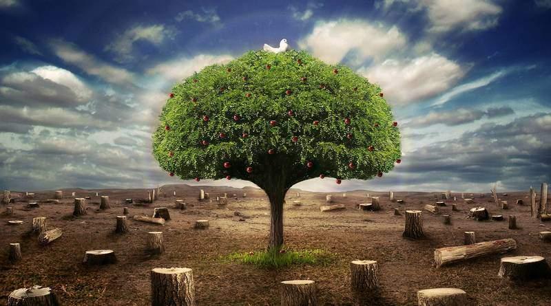 Держава як дерево